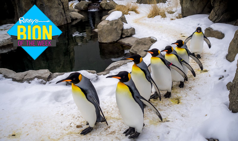 too cold for penguins