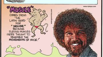"Coffee brand Chock Full O'Nuts does not contain any nuts!-------------------- ""Muscle"" comes from the Latin word for ""mouse"" because flexing muscles were thought to resemble the movements of mice!--------------------- Painter Bob Ross, who donned a distinctive afro, permed his hair to save money on haircuts!"