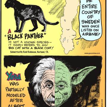 """A """"black panther"""" is not a known species - it simply refers to any big cat with a black coat! Submitted by Reid Robinson, Garland, TX.-------------------- The entire country of Sweden was once listed on Airbnb!--------------------Yoda was partially modeled after Albert Einstein!"""