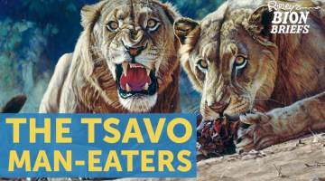 tsavo man-eaters