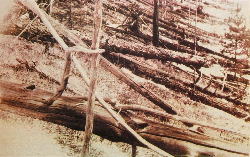 tunguska event trees