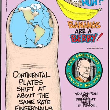 Continental plates shift at about the same rate fingernails grow!-------------------- Bananas are a berry!-------------------- You can run for president while in prison. Submitted by Reid Robinson, Garland, TX.