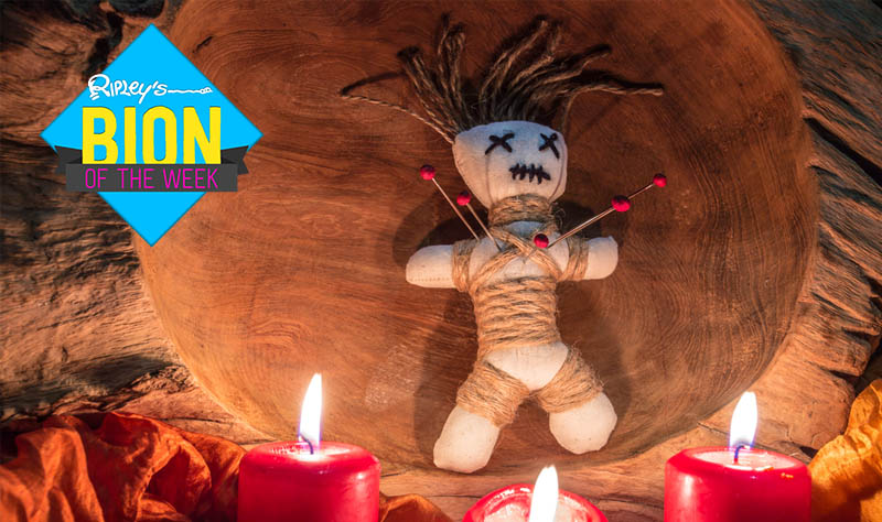 Voodoo Dolls of Your Boss Could Improve Productivity