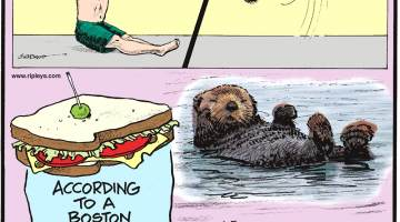 "In March 2018, Brandon Burns of Michigan performed a seated backflip - one of only two people in the world to accomplish this feat!-------------------- According to a Boston court ruling, a sandwich must include ""at least two slices of bread.""-------------------- With the world's thickest fur, sea otters have about 800 million hairs on their bodies!"