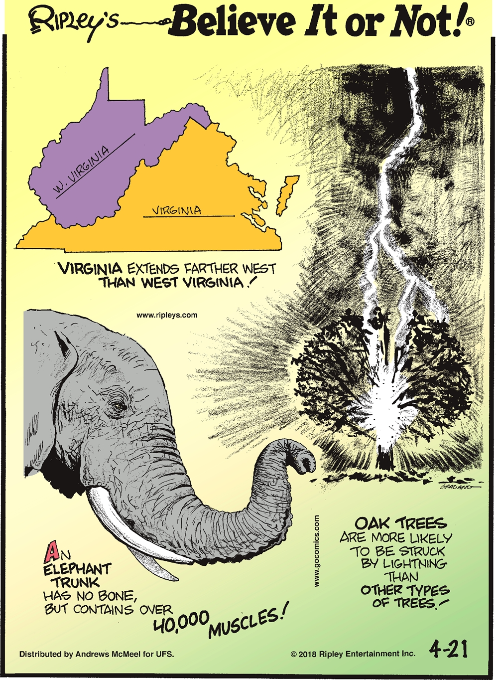 Virginia extends farther west than West Virginia!-------------------- An elephant trunk has no bone, but contains over 40,000 muscles!-------------------- Oak trees are more likely to be struck by lightning than other types of trees!