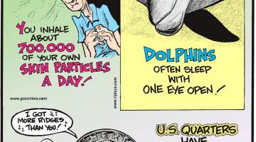 You inhale about 700,000 of your own skin particles a day!-------------------- Dolphins often sleep with one eye open!-------------------- U.S. quarters have 119 ridges while dimes, much smaller, have one less ridge - 118!