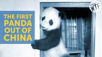 first panda