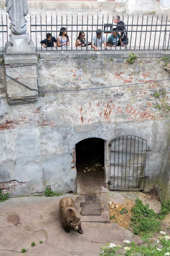 bear moat