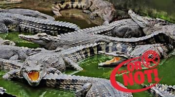 moat crocodiles