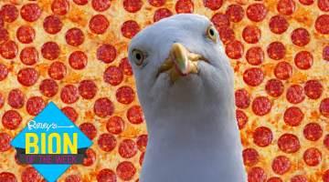 seagull-pepperoni