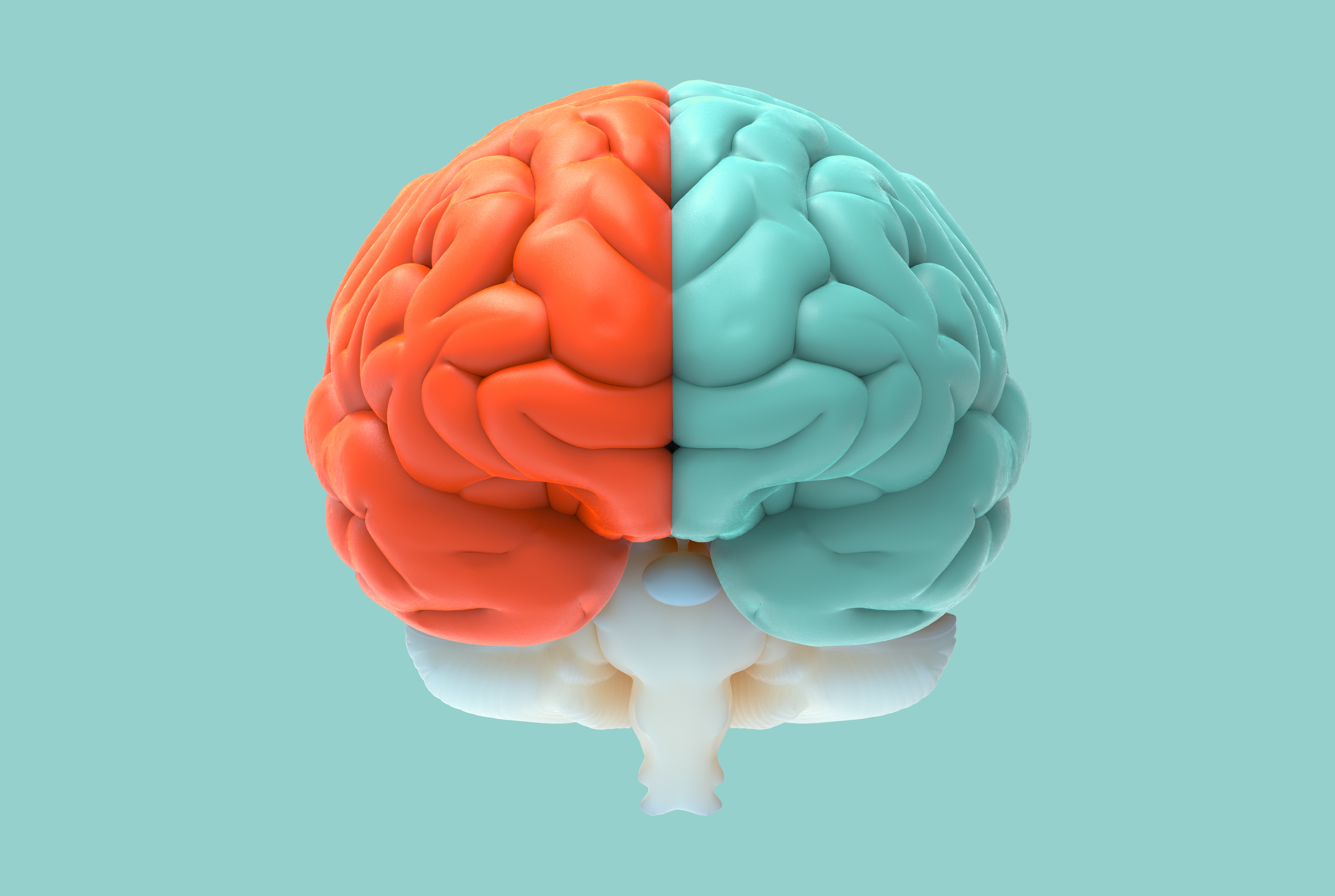 Are You A Left Brain or Right Brain? The Answer is...