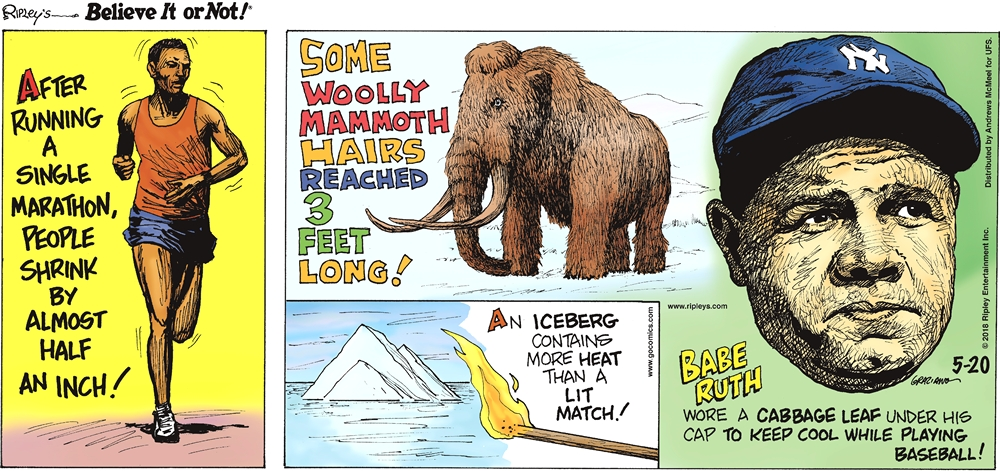 After running a single marathon, people shrink by almost half an inch!-------------------- Some woolly mammoth hairs reached 3 feet long!-------------------- An iceberg contains more heat than a lit match!-------------------- Babe Ruth wore a cabbage leaf under his cap to keep cool while playing baseball!