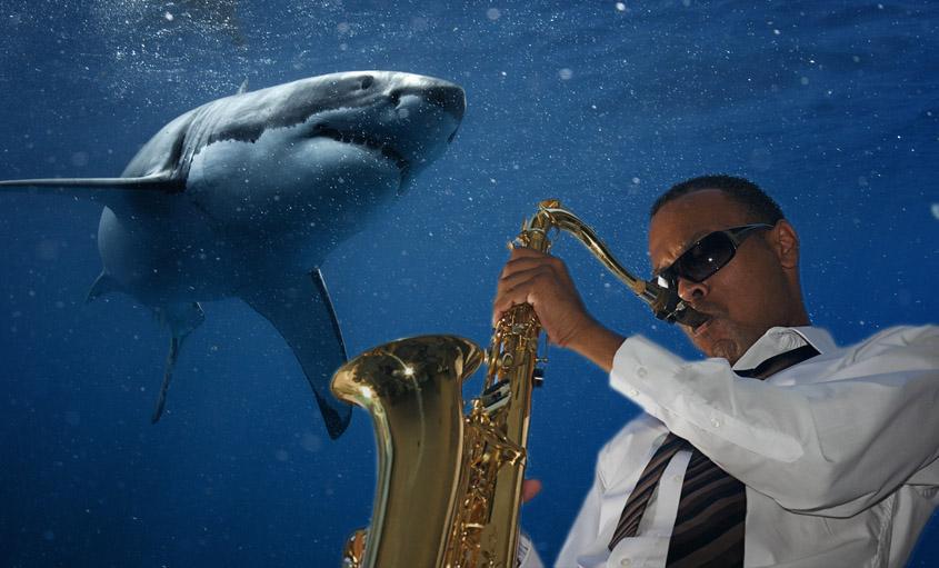 jazz shark