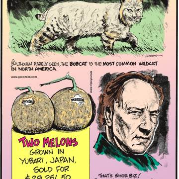 Although rarely seen, the bobcat is the most common wildcat in North America.-------------------- Two melons grown in Yubari, Japan, sold for $29,251.50 at auction!-------------------- That's shoe biz! Filmmaker Werner Herzog once publicly cooked and ate his shoe!