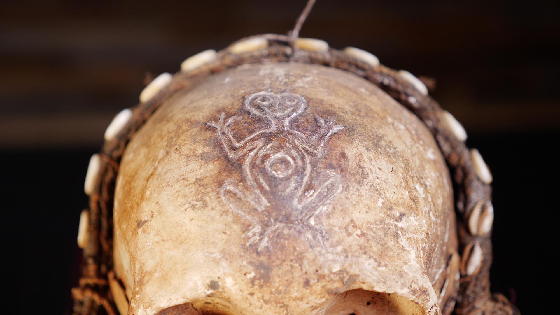 midwife skull closeup