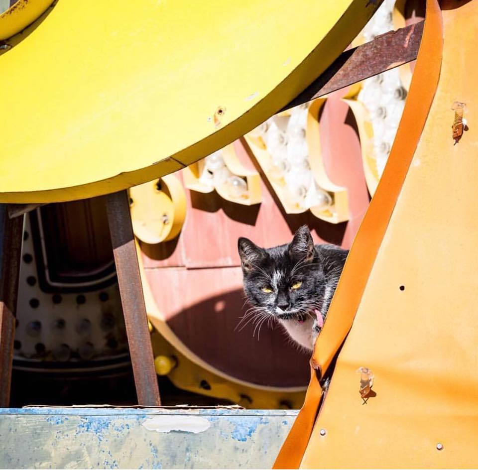 elvis neon museum cat