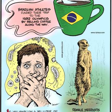 Brazilian athletes funded their trip to the 1932 Olympics by selling coffee along the way.-------------------- If you swallow a milliliter of ocean water, you've gulped about 1 million bacteria and 10 million viruses!--------------------- Female meerkats have more testosterone than males.