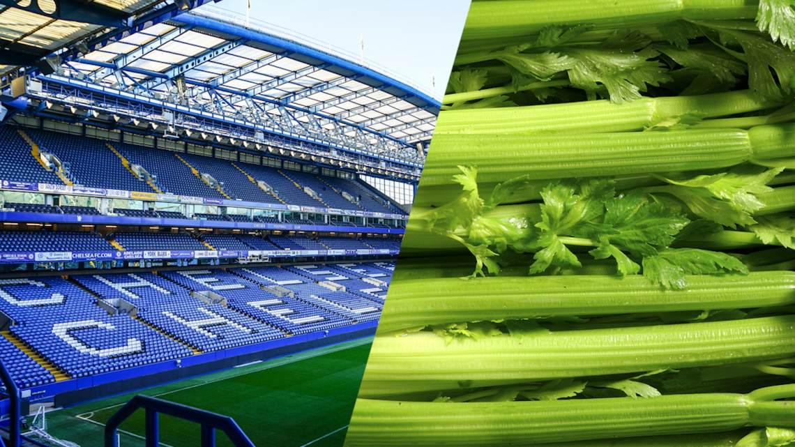 chelsea football club celery