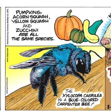 1. During the 2018 World Cup match between Japan and Colombia, water usage surged 24% in the country of Japan during halftime as fans all ran for the bathroom! 2. Pumpkins, acorn squash, yellow squash and zucchini are all the same species. 3. The xylocopa caerulea is a blue-colored carpenter bee! 4. The golden mole cannot see, despite having eyes - its skin grows over them!