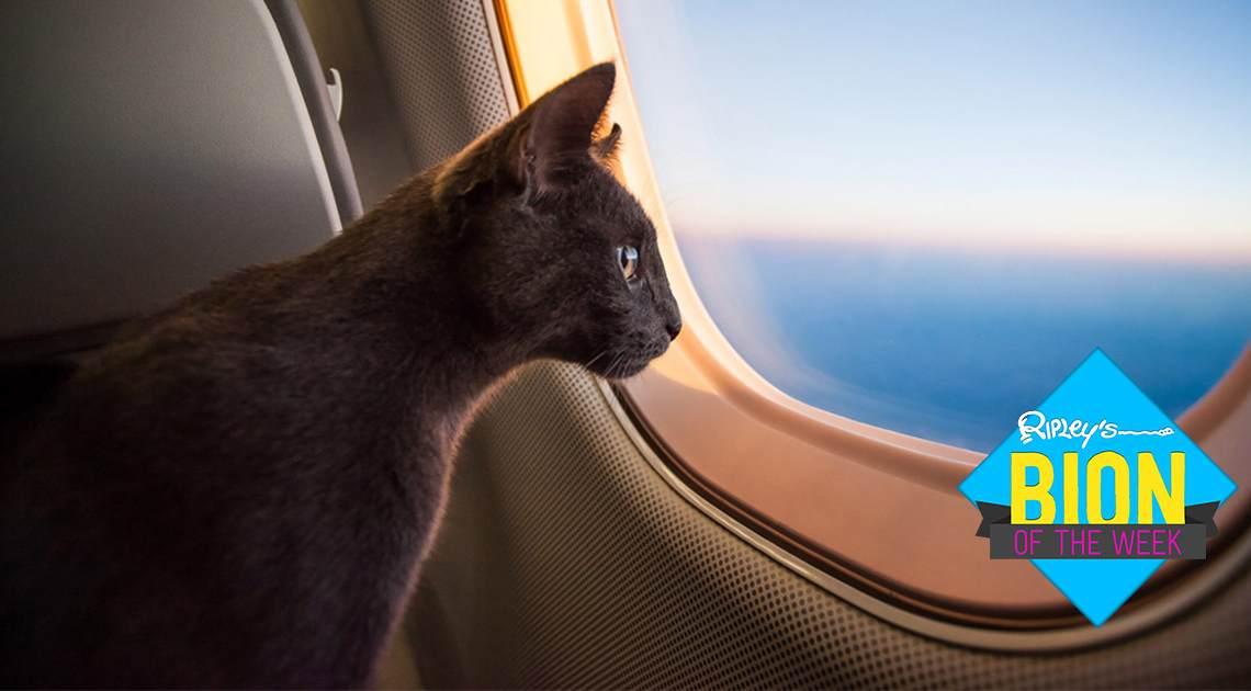 feline airlift