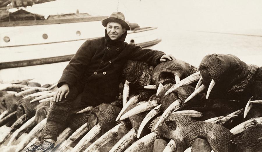 walrus tusk hunter