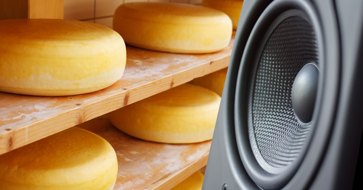 musical cheese