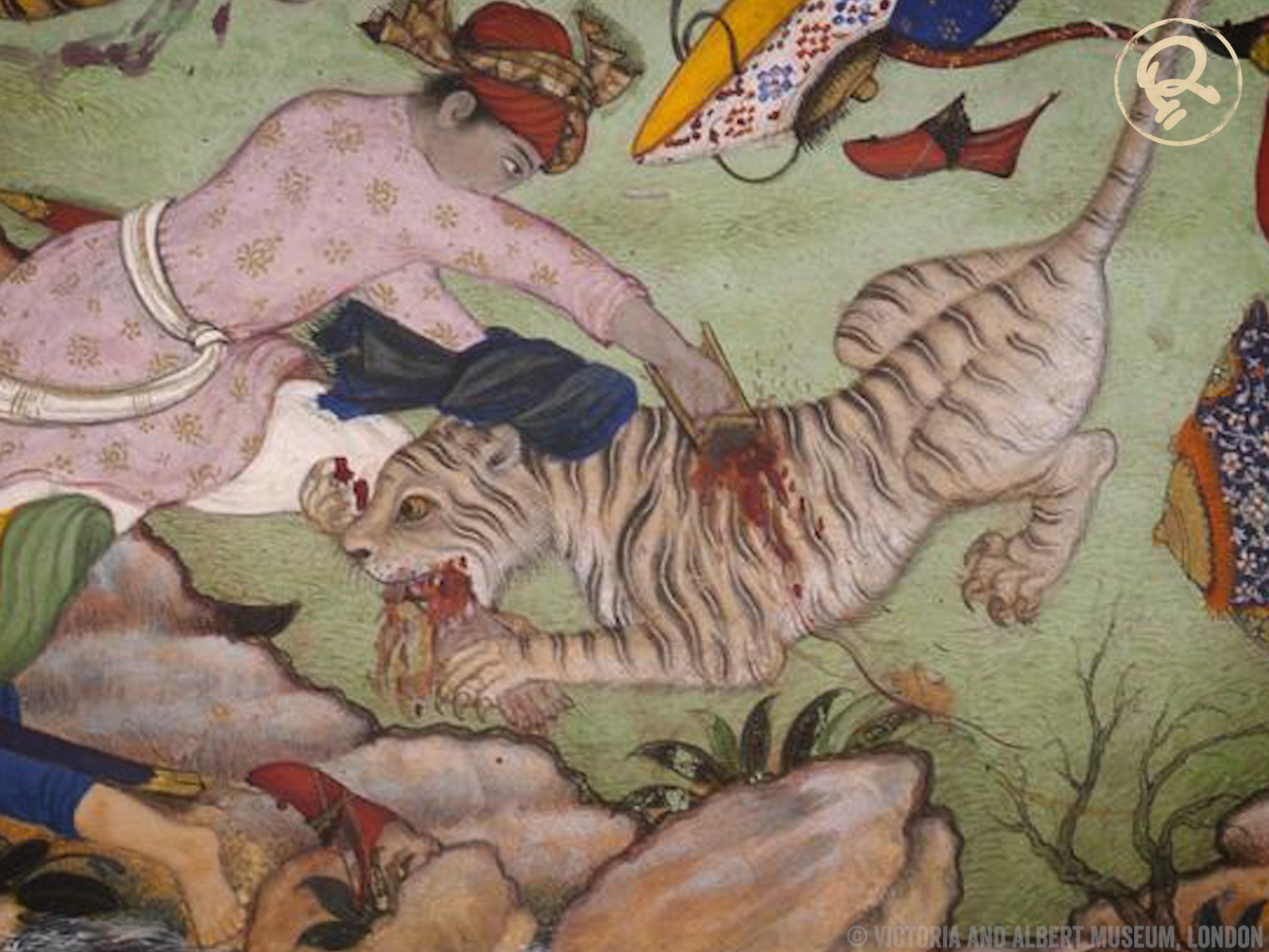 katar fights tiger