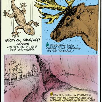 1. Sticky on, sticky off! Geckos can turn on or off their stickiness. 2. A reindeer's eyes change color depending on the season. 3. Scientists recently discovered what may be Canada's largest cave in remote northwestern British Columbia. This unexplored cavern even has a waterfall that likely flows into a river nearly 7,000 miles away!
