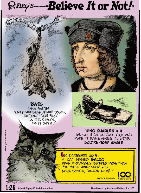 1. Bats give birth while hanging upside down, catching their baby in their wings as it drops! 2. King Charles VIII had six toes on each foot and made it fashionable to wear square-toed shoes. 3. In December 2018, a cat named Baloo was mistakenly shipped more than 700 miles away from his Nova Scotia, Canada, home!