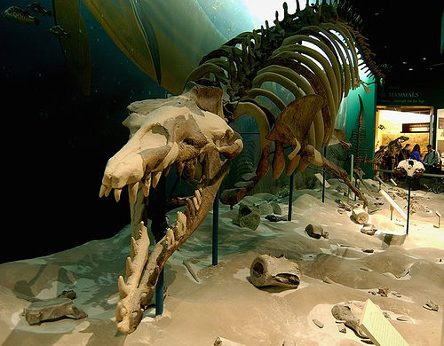 the basilosaurus king of lizards was actually a whale