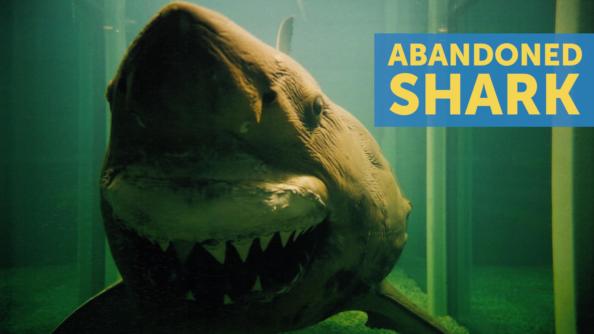 Abandoned Shark Found In Defunct Wildlife Park