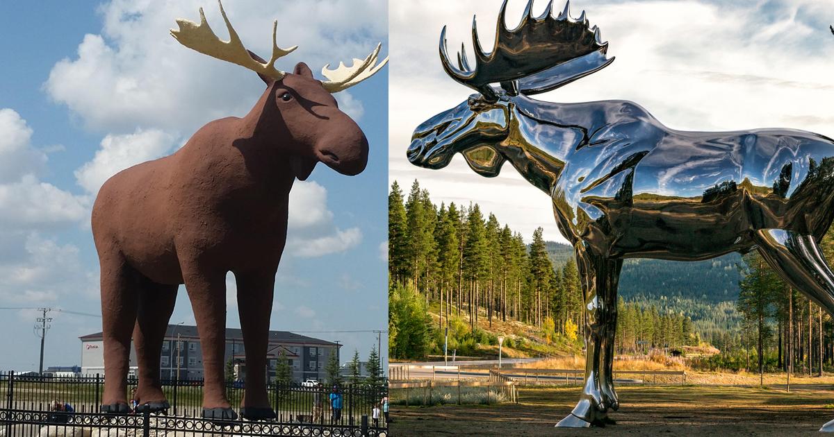 moose vs moose