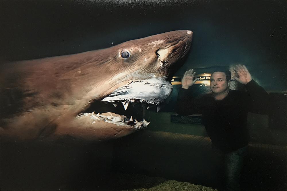 abandoned shark