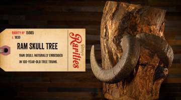ram skull in tree