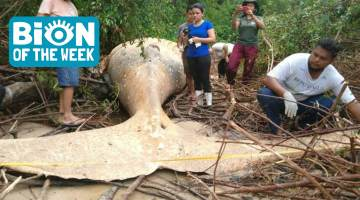 whales washes up in amazon