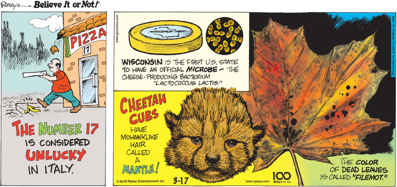 "1. The number 17 is considered unlucky in Italy. 2. Wisconsin is the first U.S. state to have an official microbe - the cheese-producing bacterium ""lactococcus lactis."" 3. Cheetah cubs have mohawklike hair called a mantle! 4. The color of dead leaves is called ""filemot."""