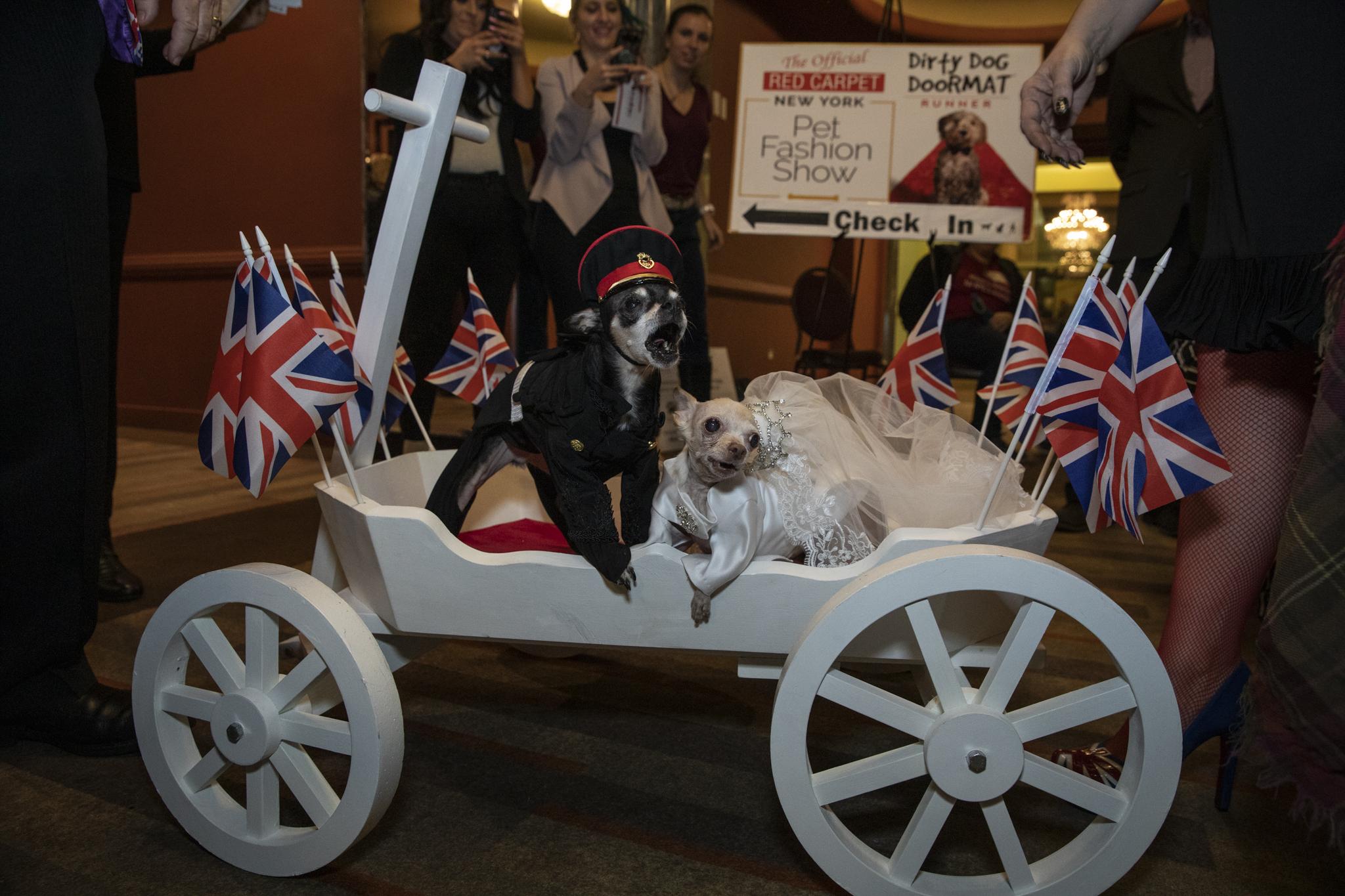 royal dog wedding