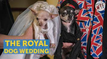 royal dog wedding