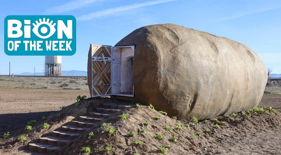 giant potato airbnb