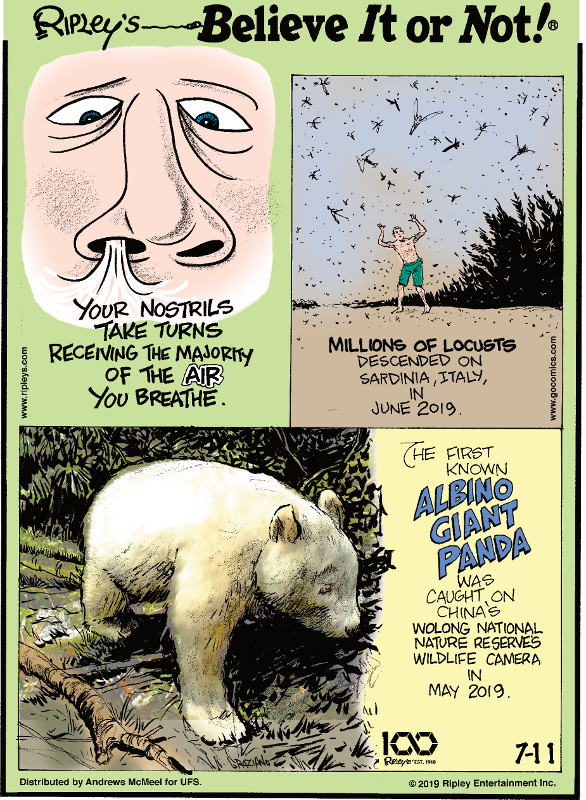1. Your nostrils take turns receiving the majority of the air you breathe. 2. Millions of locusts descended on Sardinia, Italy, in June 2019. 3. The first known albino giant panda was caught on China's Wolong National Nature Reserves wildlife camera in May 2019.