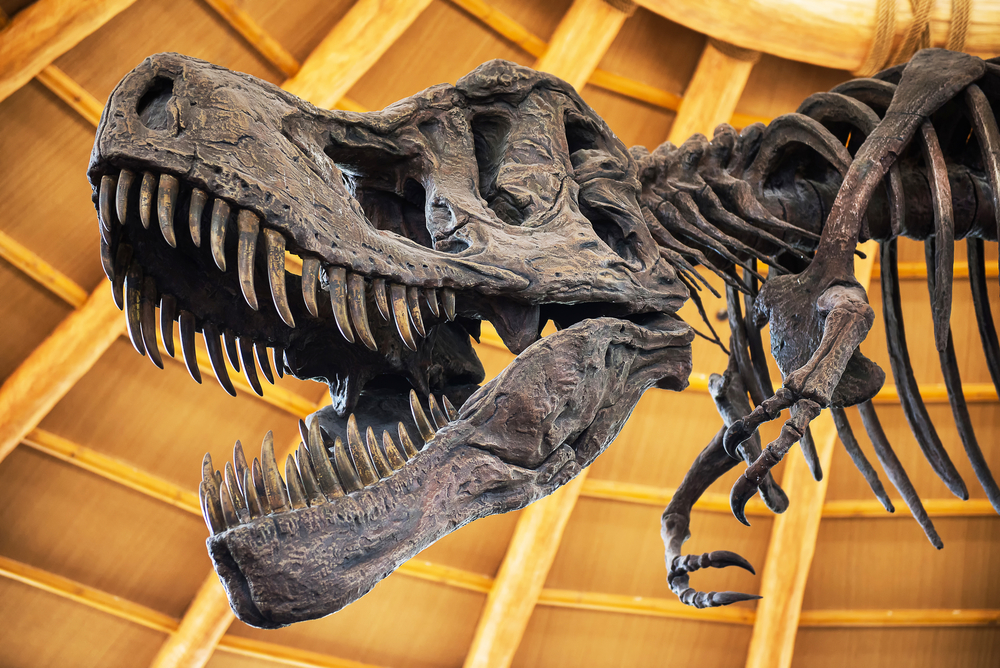 t. rex arms