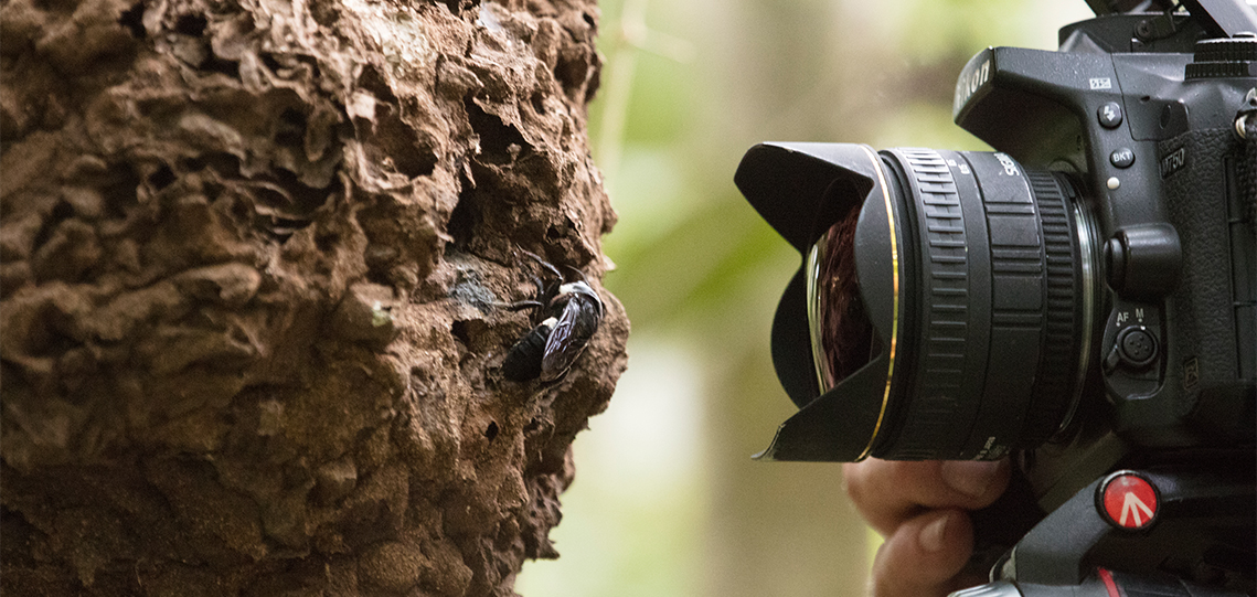 photographing bug