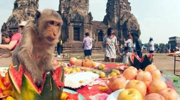 Thailand's Eclectic Monkey Buffet Festival