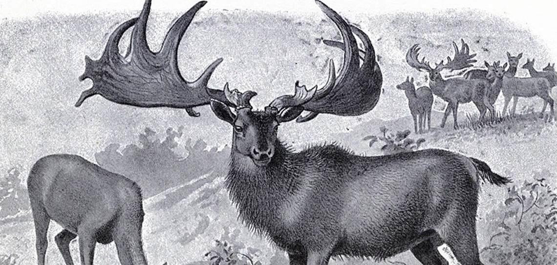 deer-like creatures