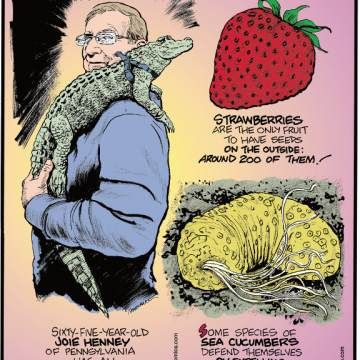 1. Strawberries are the only fruit to have seeds on the outside: around 200 of them! 2. Sixty-five-year-old Joie Henney of Pennsylvania has an emotional support alligator named Wally! 3. Some species of sea cucumbers defend themselves by expelling their poisonous internal organs!