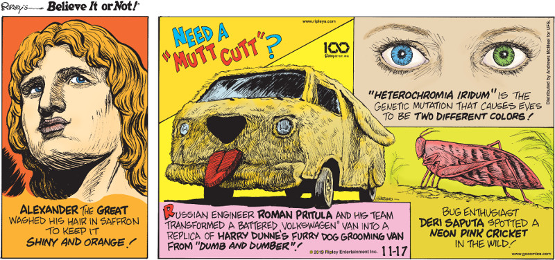 "1. Alexander the Great washed his hair in saffron to keep it shiny and orange! 2. Russian engineer Roman Pritula and his team transformed a battered Volkswagon® van into a replica of Harry Dunne's furry dog grooming van from ""Dumb and Dumber""! 3. ""Heterochromia iridum"" is the genetic mutation that causes eyes to be two different colors! 4. Bug enthusiast Deri Saputa spotted a neon pink cricket in the wild!"