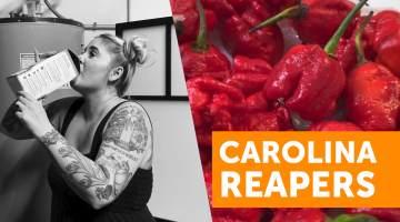 carolina reaper pepper