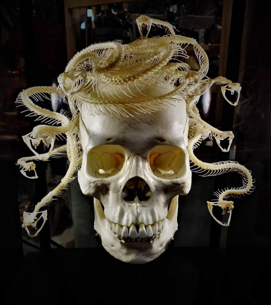 Oddities market Medusa skull