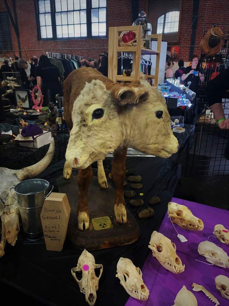 Oddities market two-headed animal