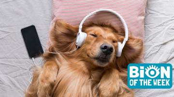 dog podcast
